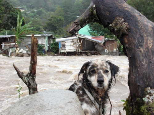 Our animal friends are also affected by the flood