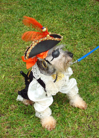 This is the dog who won the Halloween costume contest at the dog show