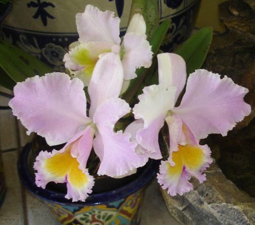 orchids-002