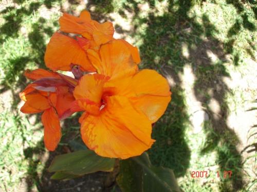 orchids-003