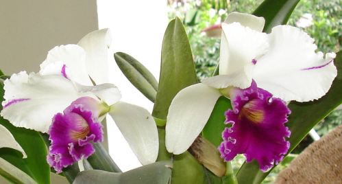 orchids-004