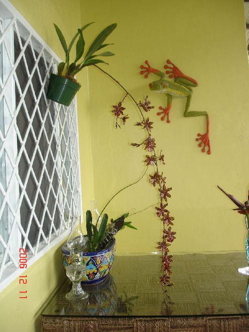 orchids-0051