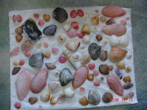 These aren't animals or plants, but shells that I picked up on the beach in Panama on the Pacific