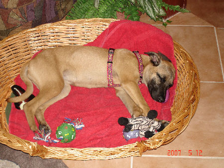 Little Zap sleeping like a baby with her toys