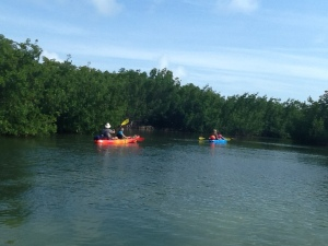 Canoers in the mangroves